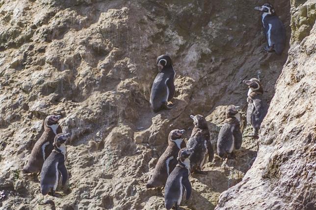 Apeco participa del Censo de pingüinos 2016